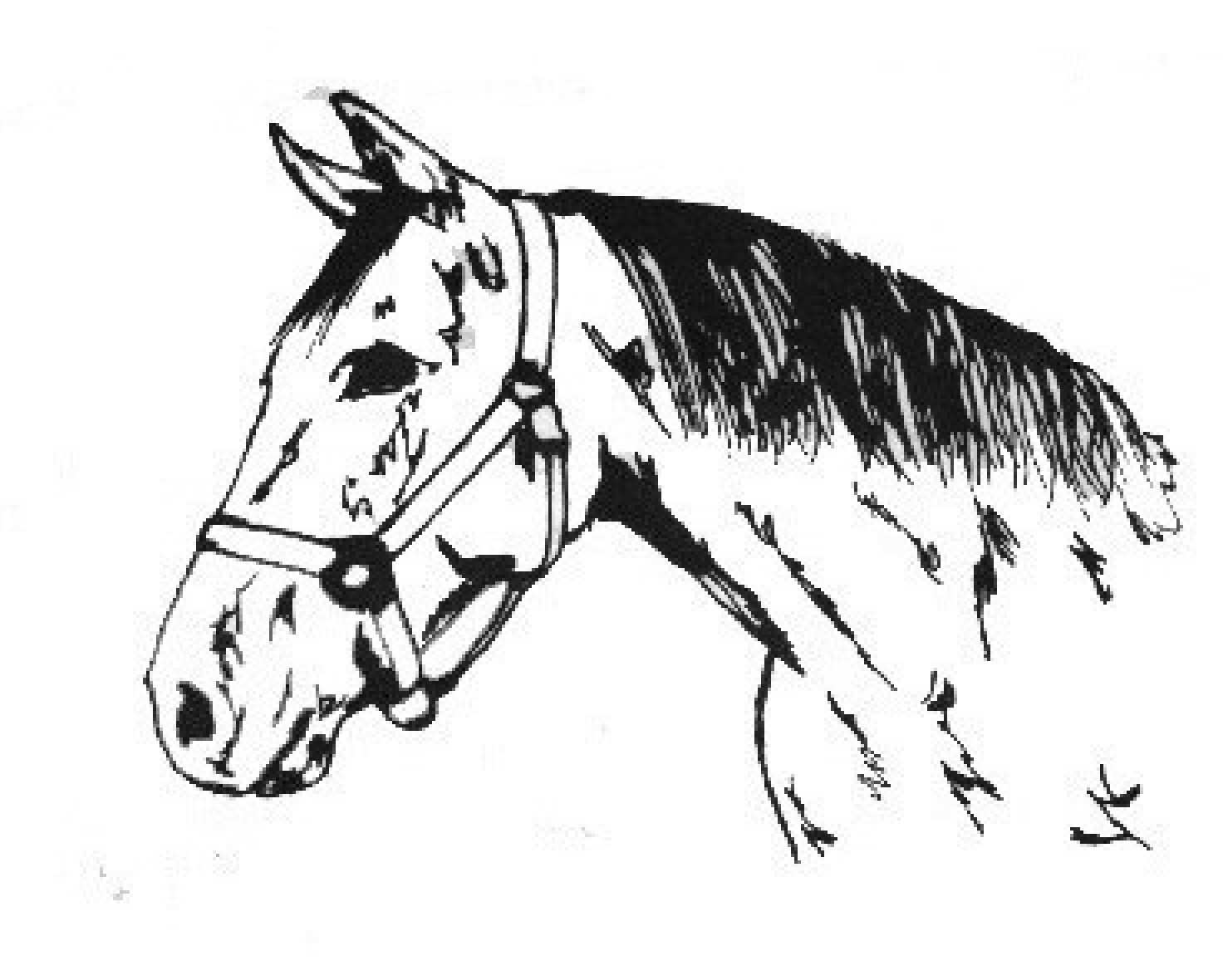 Coloring pages of horses barrel racing for Quarter horse coloring pages